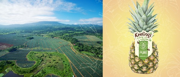 Keelings Bolster Overseas Partnerships and Acquire Pineapple Farm in Costa Rica