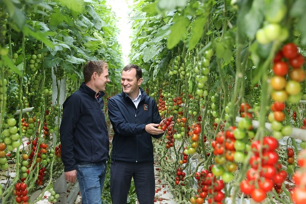 Flynn's Tomatoes wins juicy new €14m contract with Aldi Ireland