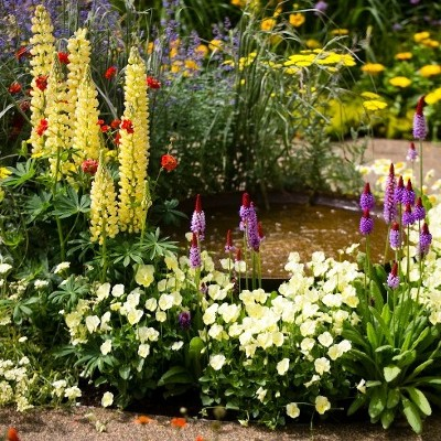 Bord Bia invites the public to Bloom At Home this May