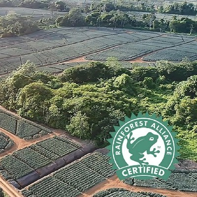 Fyffes Pineapple Farm Receives Rainforest Alliance Certification in Sustainable Agriculture