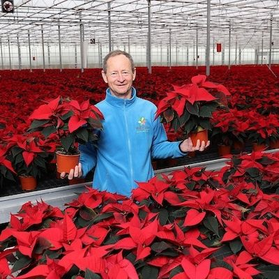 SuperValu to Sell 135,000 Irish Poinsettias In Runup To Christmas