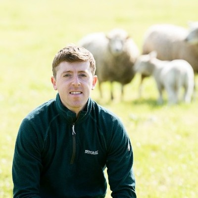 SuperValu Sales of Irish Lamb Set to Reach €16.5 million